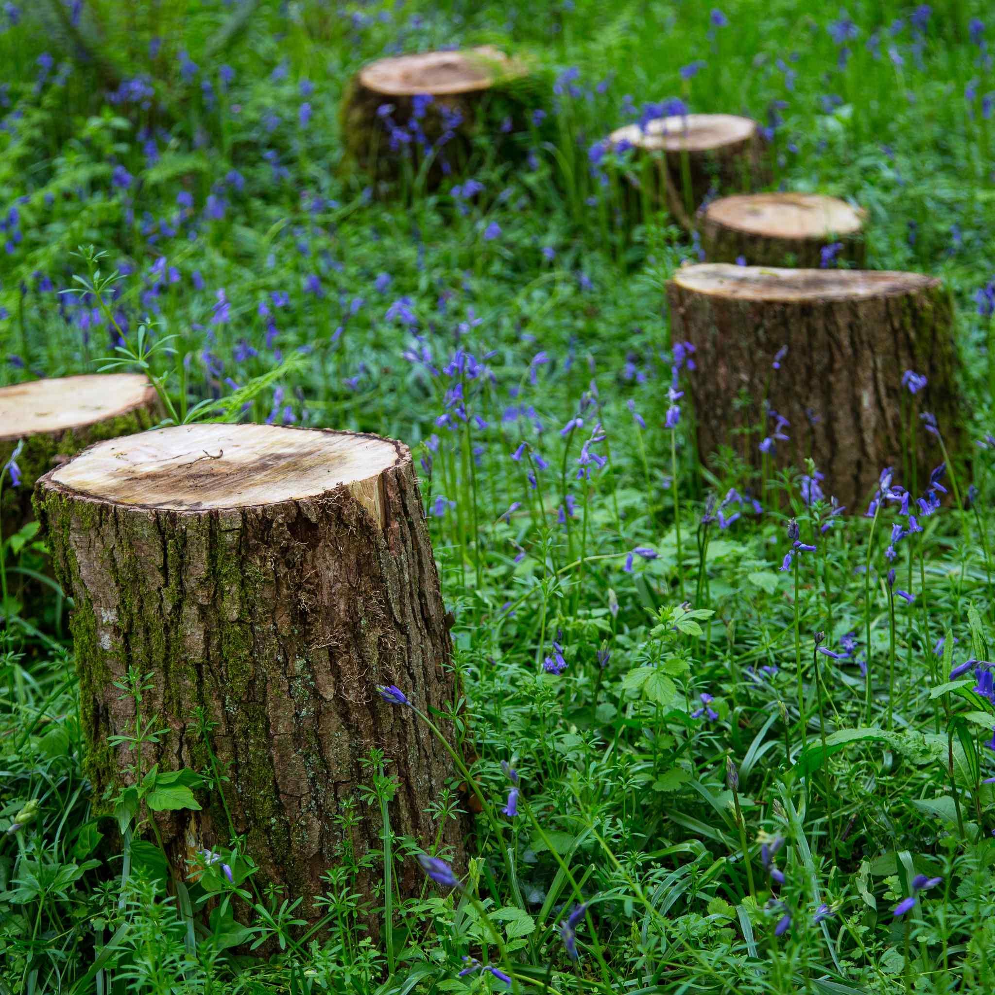 Stumps for woodland picnics