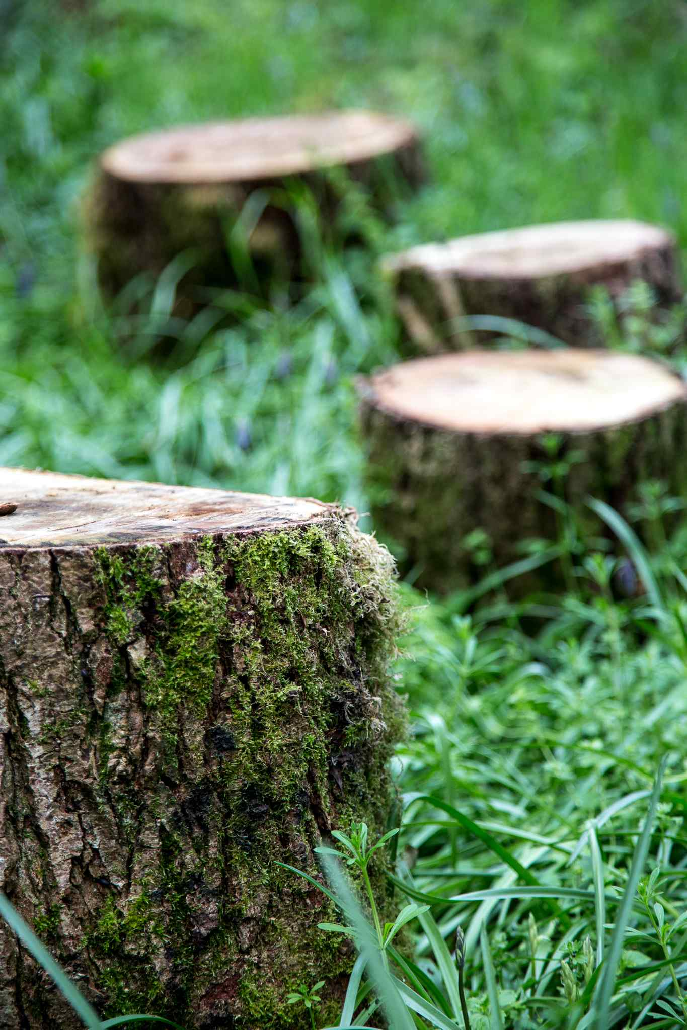 Picnic log circle in the woods