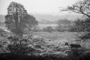 Salt Marsh on a frosty morning