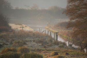 Early morning mist over the Salt Marsh