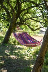 Hammock in orchard