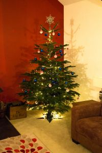 Your own Christmas tree ready for you over the festive period