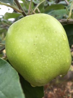 Green apples!