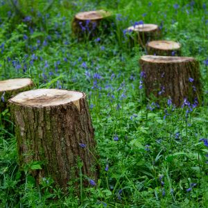 Stumps for woodland picnics