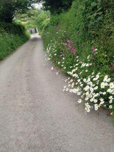 Lane To Lower Marsh Farm
