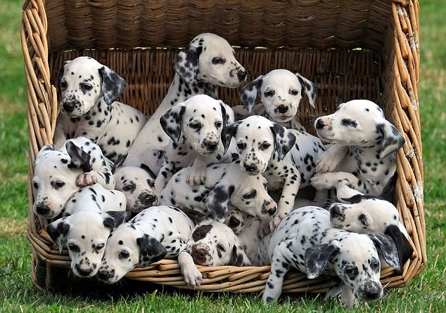 101 Dalmatians puppies lived here - Lower Marsh Farm